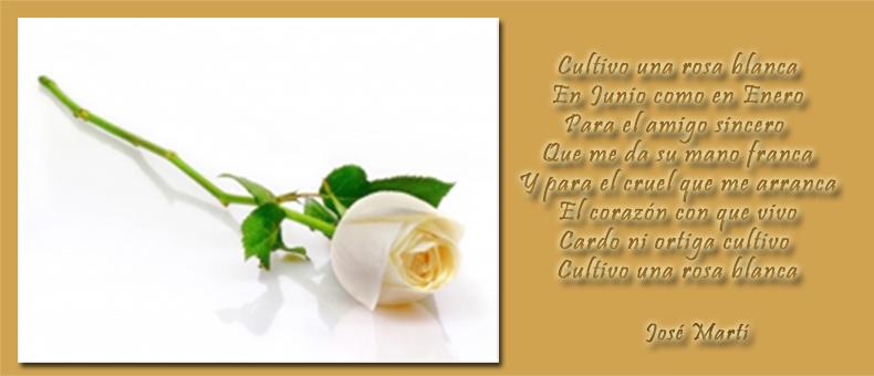 Cultivo una rosa blanca de Marti